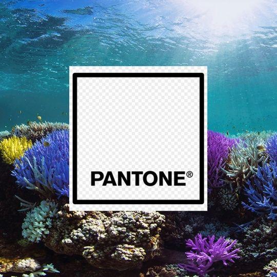 ¿De qué color son corales en peligro de extinción?